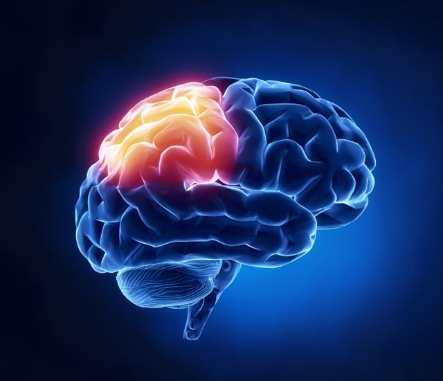 mozgani