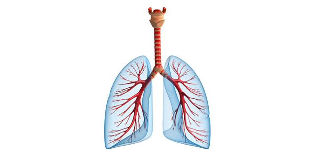 pljuča