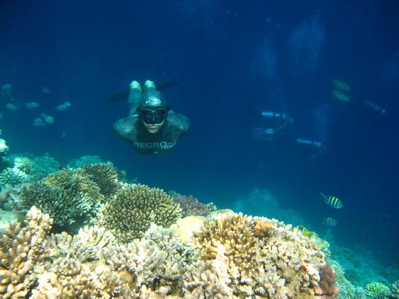 apnea_Red Sea (autor Slaven Cubric)