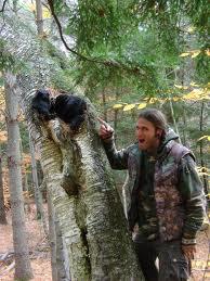 caga-na-drevesu