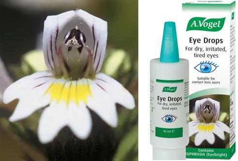 Eybright---Euphrasia-officinalis_OfficeandWeb