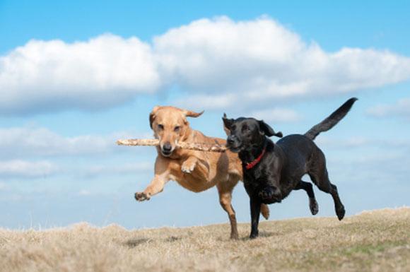 zavarovanje-psa