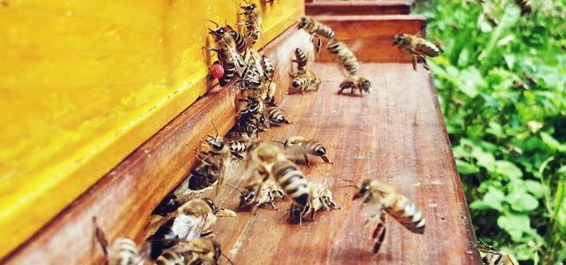 pomanjkanje-medu