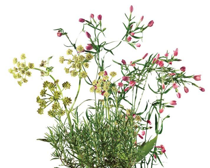 Rastline-za-mehur