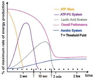 graf2-kardio
