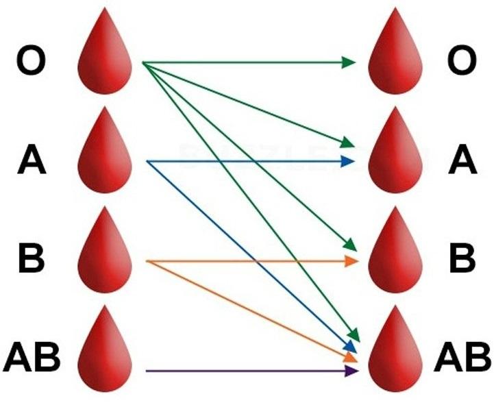 krvne skupine1