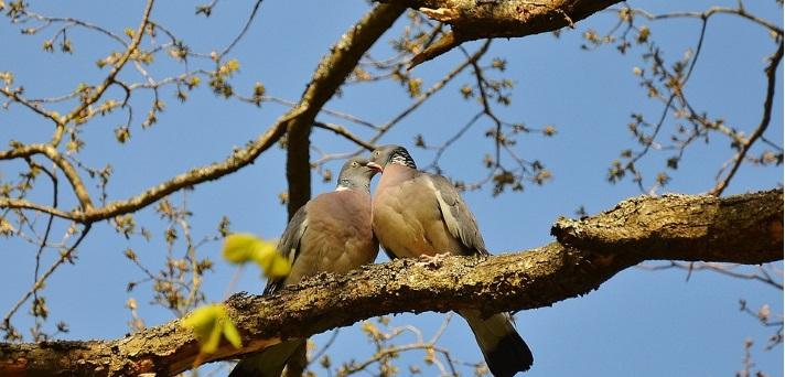 Ko se ptički ženijo