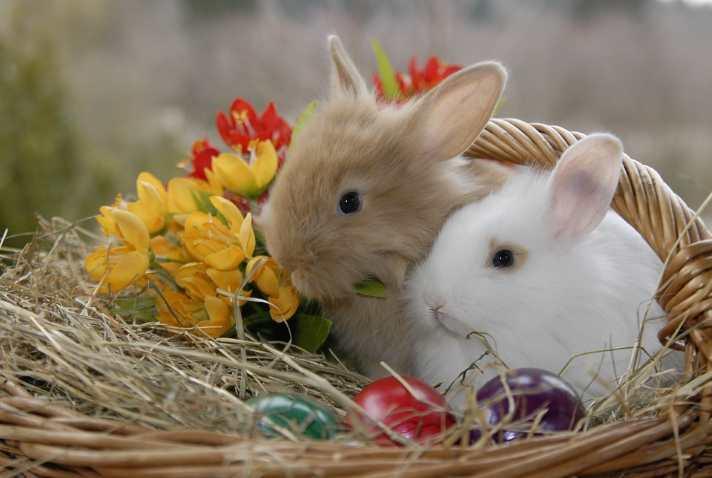 velikonocna zajcka