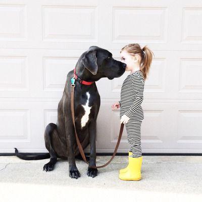 puncka in pes