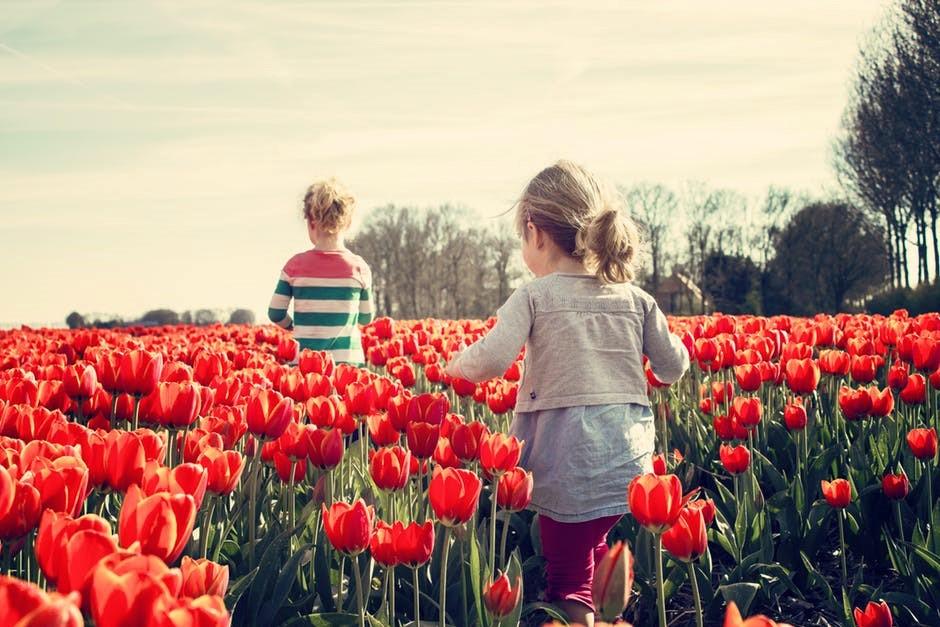dijete tulipan