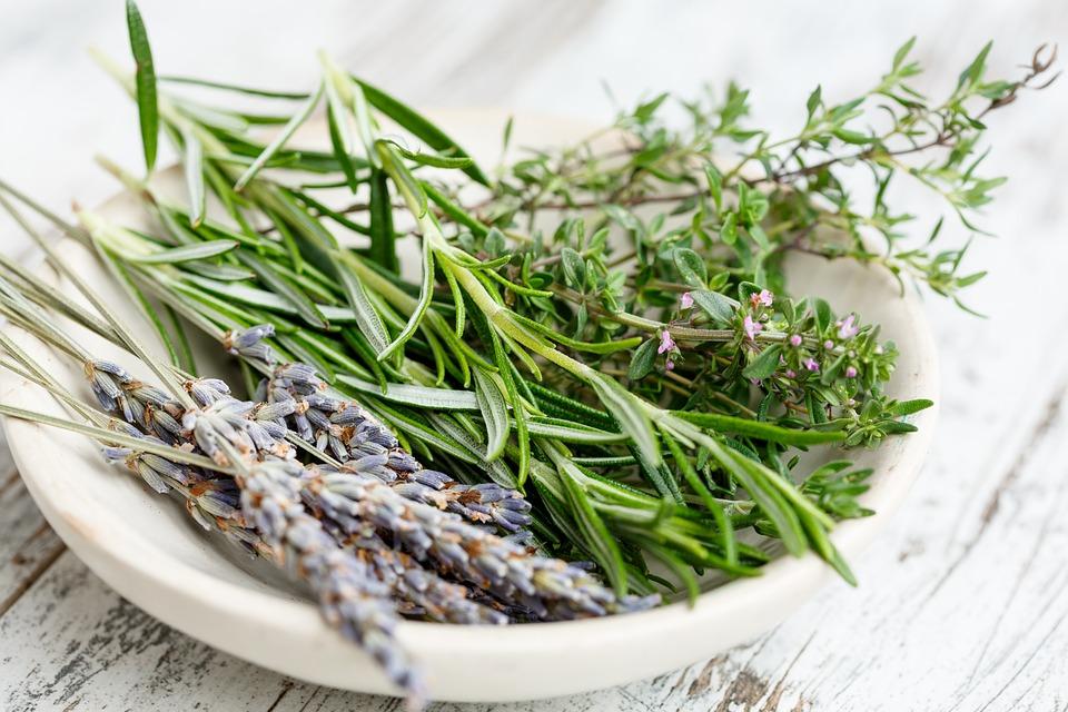 ruzmarin lavanda majcina dusica zacin ljekovitost biljka