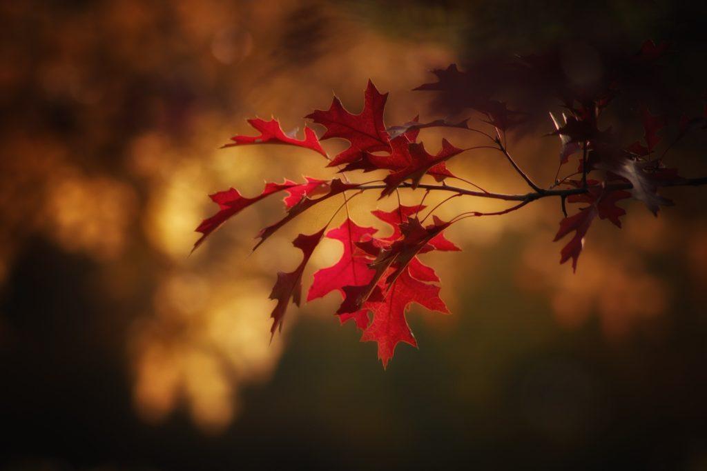 jesen listje izguba zalost upanje