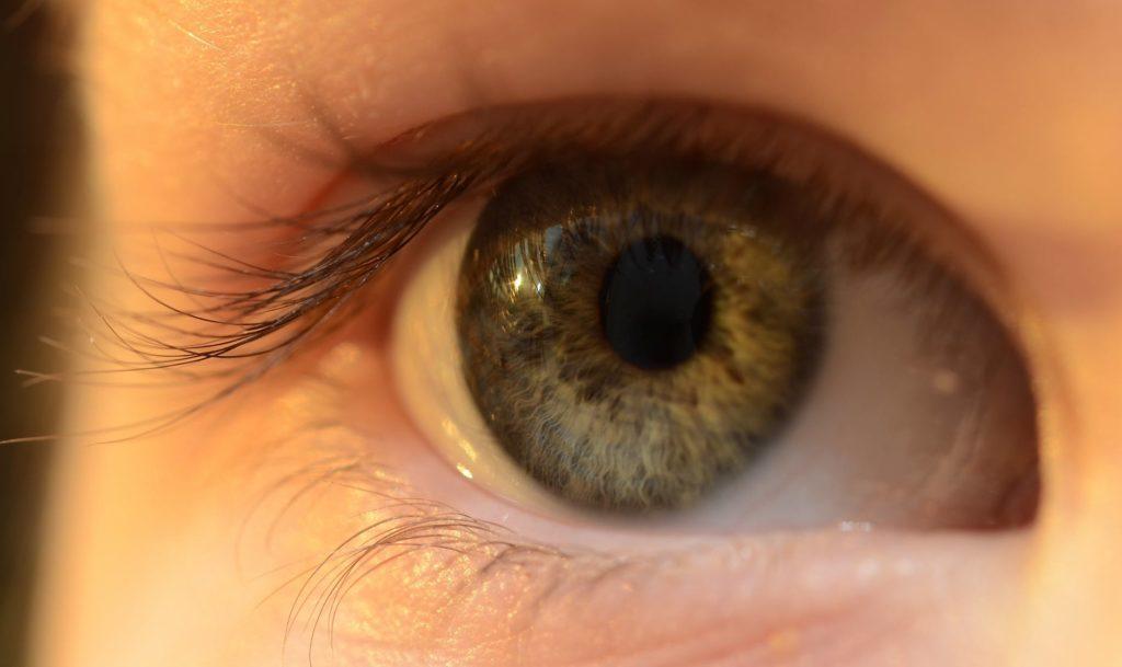 kopalci z lečami, bližnji posnetek očesa