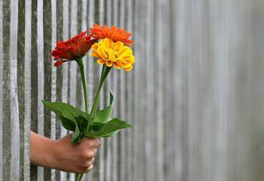 poklon darilo cvetje ljubezen